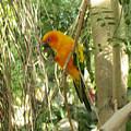 A Parakeet In Paradise by David Thirumur