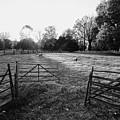 A Pasture Scene  by Rachel Morrison