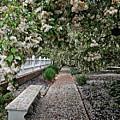 A Path Of Petals by Marcia Lee Jones