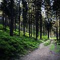 A Path Through A Dense Forest by Jozef Jankola