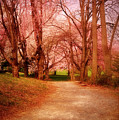 A Path To Fantasy - Holmdel Park by Angie Tirado