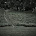A Path Traveled by Michael Dorr-benham