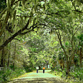 A Peaceful Walk by Laura Mace Rand