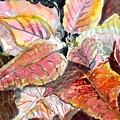 A Peach Of A Poinsettia by Mindy Newman