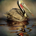 A Pelican And His Reflection by Stevie Benintende