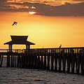 A Pelican Dive-bomb At The Naples Pier Naples Fl by Toby McGuire