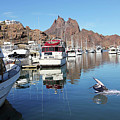 A Pelican Lands In The Old San Carlos Marina, Guaymas, Sonora, M by Derrick Neill