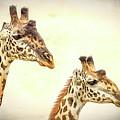 A Perfect Pair- Masai Giraffe by Cindi Alvarado