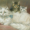 A Persian Cat And Her Kittens by Maud D Heaps
