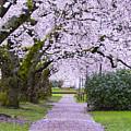 A Pink Pathway by Matt McDonald