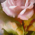 A Pink Rose For Amelia by Ronald Bolokofsky