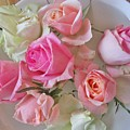 A Plate Of Roses by Rosita Larsson