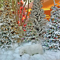 A Polar Bear Christmas by Marian Bell