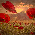 A Poppy Kind Of Morning by Debra and Dave Vanderlaan