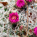 A Prickly Bed by Christopher Holmes