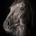 A Race Horse Named River by Brad Allen Fine Art