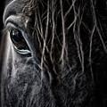 A Race Horse Named Tikki by Brad Allen Fine Art