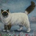 A Himalayan Cat by John Bower
