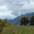 A Rainy Day In The Mountains Of Ecuador by Teresa Stallings