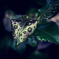 A Rainy Day by Serena Vachon