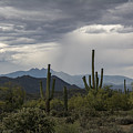 A Rainy Desert Afternoon  by Saija  Lehtonen
