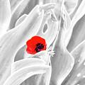 A Red Dot by Arik Baltinester