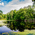 A Reflected Forest On A Lake With Lily Pads by Joshua Zaring