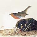 A Robin Perched On A Mossy Stone by John James Audubon
