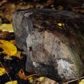 A Rock Amongst Decay by Carol J Deltoro
