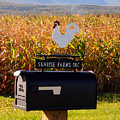 A Rooster Above A Mailbox 1 by Jeelan Clark