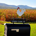 A Rooster Above A Mailbox 2 by Jeelan Clark