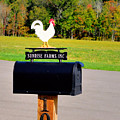 A Rooster Above A Mailbox 3 by Jeelan Clark