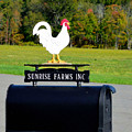 A Rooster Above A Mailbox 4 by Jeelan Clark
