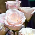 A Rose For You by Eva Thomas
