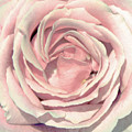 A Rose Is A Rose by Margaret Hormann Bfa