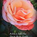 A Rose Is Still A Rose by Dora Sofia Caputo Photographic Design and Fine Art