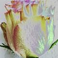 A Rosy Birthday Wish by Barbie Corbett-Newmin