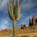 A Saguaro In Spring by James Eddy