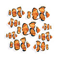 A School Of Clown Fish by Trevor Irvin