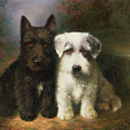 A Scottish And A Sealyham Terrier by Lilian Cheviot