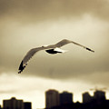 A Seagull Call by Kerry Langel