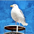 A Seagull Pauses by Debra  Miller