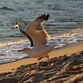 A Seagull Starts His Flight by Samantha Mattiello