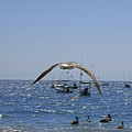 A Seagulll In-flight At Playa Manzanillo by James Connor