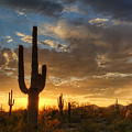 A Serene Sunset In The Sonoran Desert  by Saija  Lehtonen