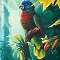 A Shady Spot - St. Lucia Parrot by Christopher Cox