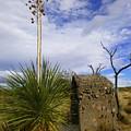 A Shrine In The Desert by Teresa Stallings