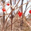 A Sign Of Spring by Jennifer Craft