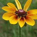 A Single Flower by Dianne Patten