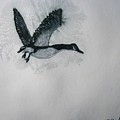 A Single Goose by Patricia Arroyo